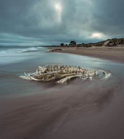 Whale backbone on beach. Long exposure photograph with moving water and dramatic sky.