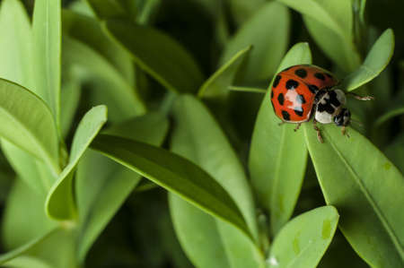 Lady bug Stock Photo - 15462826