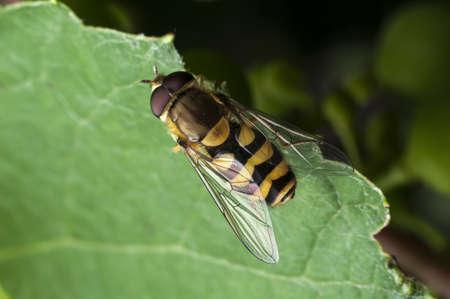 Honney Bee Stock Photo - 15694262