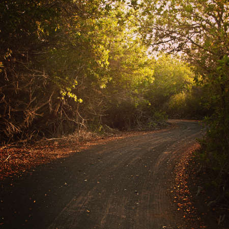A empty dirty road close to sunset, in Galapagos Islands, Ecuador Stock Photo