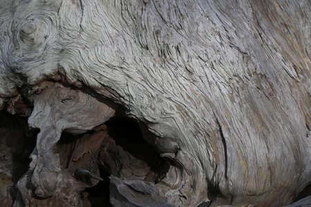 奇妙な形成で死んだ木の幹 写真素材