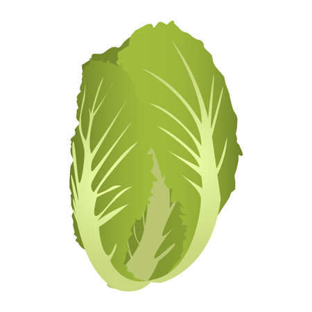 brassica: Chard isolated on a white background. Illustration