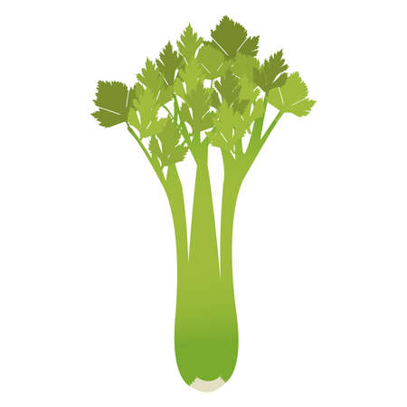 celery: Celery isolated on a white background.