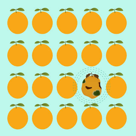 contamination: Rotten orange between several mature and healthy oranges. Contamination concept.