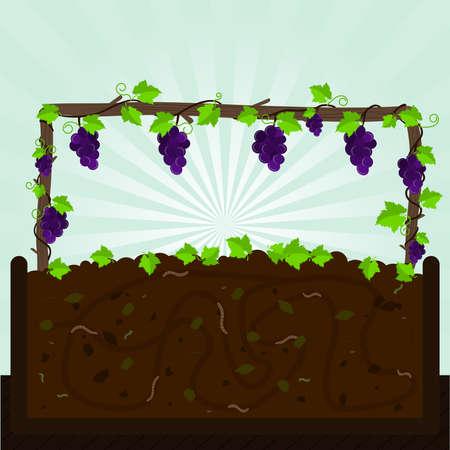 kompost: Grapevine und Kompost. Weintraube und Kompostierung mit organischem Material, Mikroorganismen und Regenw�rmer. Gefallene Bl�tter auf dem Boden. Illustration