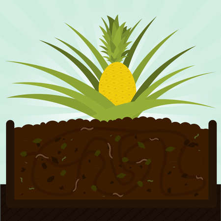 Pineapple tree and compost. Composting process with organic matter, microorganisms and earthworms. Fallen leaves on the ground. Illustration