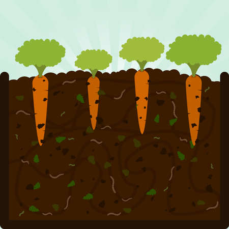 Planting carrots and compost. Composting process with organic matter, microorganisms and earthworms. Fallen leaves on the ground. Illustration