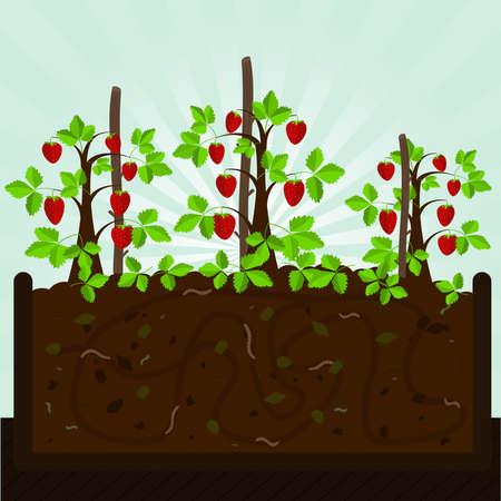 kompost: Erdbeerbaum und Kompost. Erdbeerb�ume. Kompostierung mit organischem Material, Mikroorganismen und Regenw�rmer. Gefallene Bl�tter auf dem Boden. Illustration