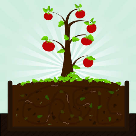 manure: Tomato tree and compost. Tomato tree. Composting process with organic matter, microorganisms and earthworms. Fallen leaves on the ground.