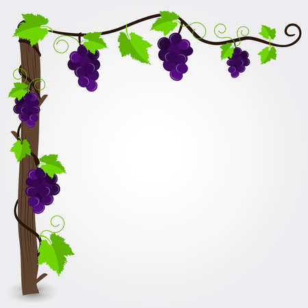 purple grapes: Grapevine frame. Frame with purple grapes corner decoration. Empty space for insert text. Illustration