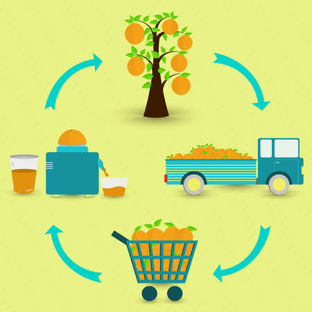 Process of orange fruit. Orange fruit production steps. Orange tree harvest transport sale at the grocery store production of orange juice at home. In a circular scheme. Vector