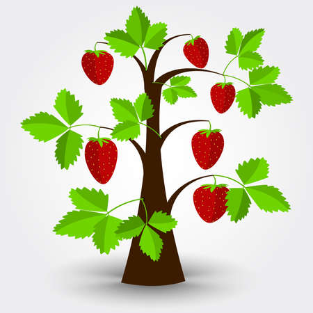strawberry tree: Strawberry tree isolated on a gray background with shadow. Editable. Illustration