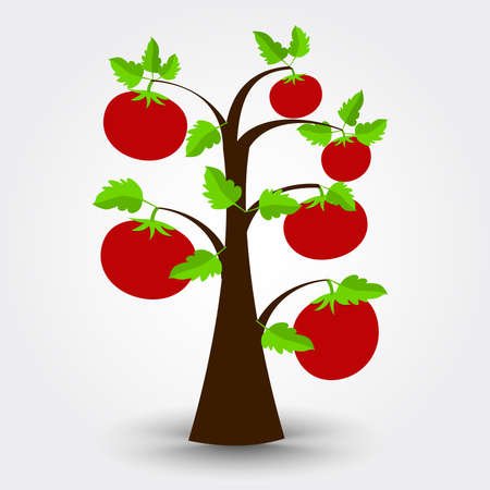 cultivable: Tomato tree isolated on a gray background with shadow. Editable. Illustration