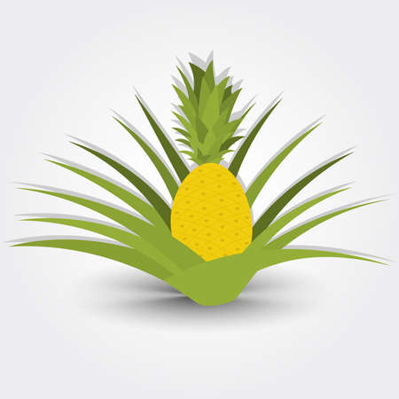 cultivable: Pineapple tree. Pineapple tree isolated on a gray background with shadow. Editable. Stock Photo