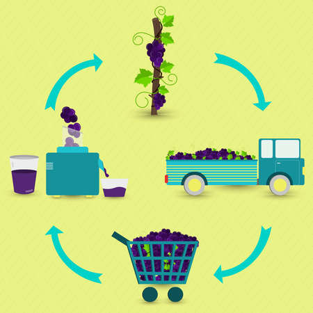 Grape juice production steps. Grape tree, harvest, transport, sale at the grocery store, production of grape juice at home. In a circular scheme.