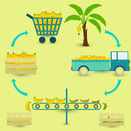conveyor system: Banana production steps. Banana tree, harvest, transport, separation of healthy and rotten bananas, sale at the grocery store. In a circular scheme.