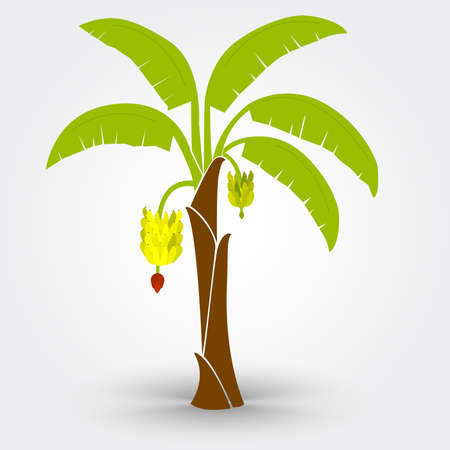 single tree: Banana tree isolated on a gray background with shadow. Editable.