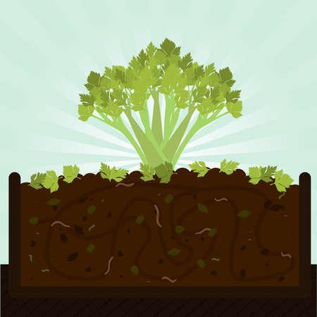 セロリの茎。有機物、微生物、ミミズ堆肥を施すプロセスは。地面に落ちた葉。