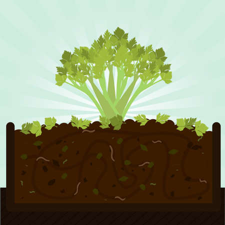 earthworms: Stalk of celery. Composting process with organic matter, microorganisms and earthworms. Fallen leaves on the ground. Illustration