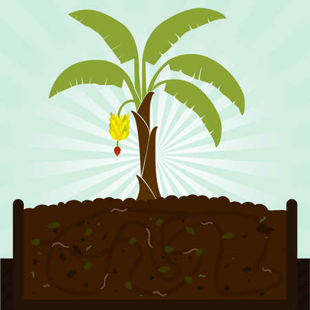 Banana tree and compost. Composting process with organic matter, microorganisms and earthworms. Illustration