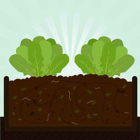 kompost: Rucola Baum und Kompost. Kompostierung mit organischem Material, Mikroorganismen und Regenw�rmer. Gefallene Bl�tter auf dem Boden.