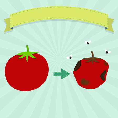 food distribution: Rotten tomato with flies and new tomato. Blank ribbon for insert text. Illustration