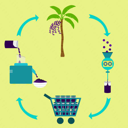 Process of acai cream. Acai cream production steps. Acai tree, harvest, fruit processing, sale the fruit pulp at the grocery store, production of acai cream at home. In a circular scheme. Brazilian food. Illustration