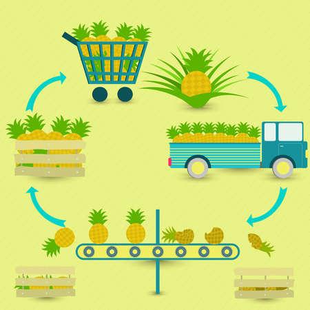 proceso: Proceso de piña. los pasos de producción de piña. árbol de la piña, la cosecha, el transporte, la separación de las piñas sanos y podridos, la venta en la tienda de comestibles. En un esquema circular.