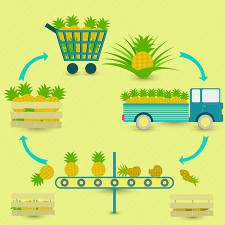 Process of pineapple. Pineapple production steps. Pineapple tree, harvest, transport, separation of healthy and rotten pineapples, sale at the grocery store. In a circular scheme. Vetores