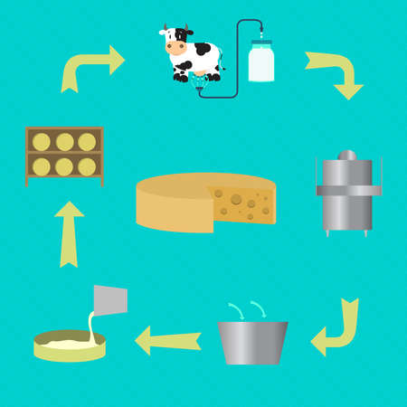 Scheme showing the process of making cheese. From milking the cow to the process of pasteurization and maturing cheese. Illustration