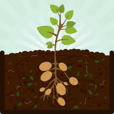 감자 심기. 유기물, 미생물 및 지렁이로 퇴비를 만드는 과정. 지상에 떨어진 낙엽. 일러스트
