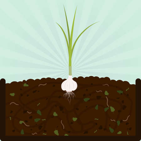composting: Planting garlic. Composting process with organic matter, microorganisms and earthworms. Fallen leaves on the ground. Illustration