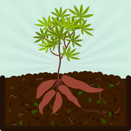 tuber: Planting manioc. Composting process with organic matter, microorganisms and earthworms. Fallen leaves on the ground. Illustration