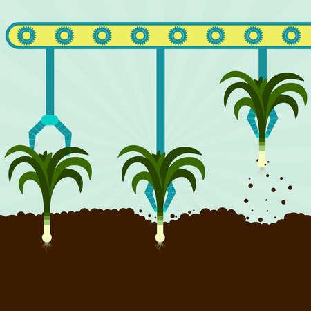 fertile: Machine with grippers harvesting leeks. Series harvest