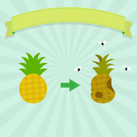 rotten: Rotten pineapple with flies and new pineapple. Blank ribbon for insert text. Illustration