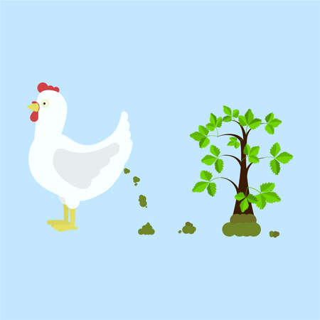Chicken pooping and fertilizing the land. Tree rising over compost. Isolated. Blue background.