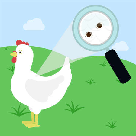 Magnifying glass enlarging chicken feathers piece with tick. Field on the background.