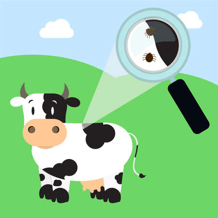 Magnifying glass enlarging cow skin piece with tick. Field on the background.