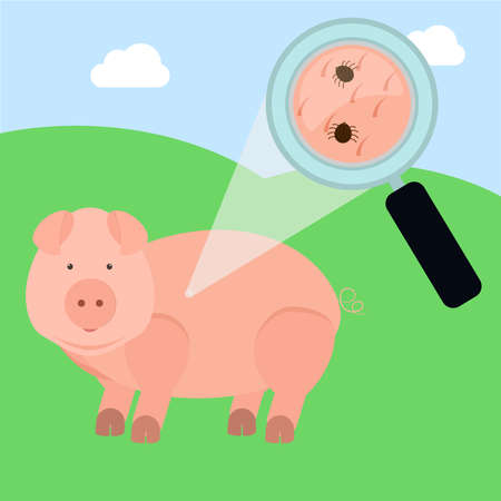 Magnifying glass enlarging pig skin piece with tick. Field on the background.