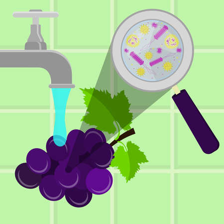 Contaminated grape being cleaned and washed in a kitchen. Microorganisms, virus and bacteria in the vegetable enlarged by a magnifying glass. Running tap water.