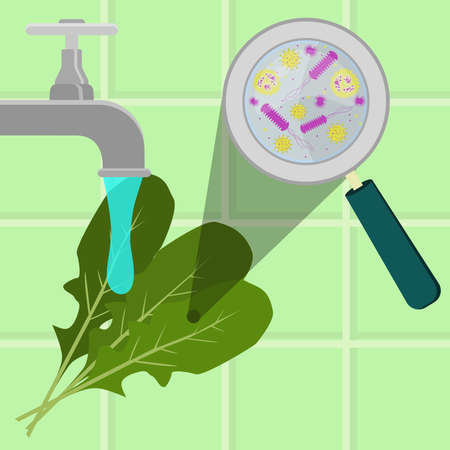 Contaminated arugula being cleaned and washed in a kitchen. Microorganisms, virus and bacteria in the vegetable enlarged by a magnifying glass. Running tap water.