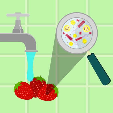 Contaminated strawberries being cleaned and washed in a kitchen. Microorganisms, virus and bacteria in the vegetable enlarged by a magnifying glass. Running tap water.