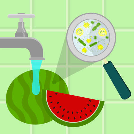 contaminated: Contaminated watermelon being cleaned and washed in a kitchen. Microorganisms, virus and bacteria in the vegetable enlarged by a magnifying glass. Running tap water. Illustration