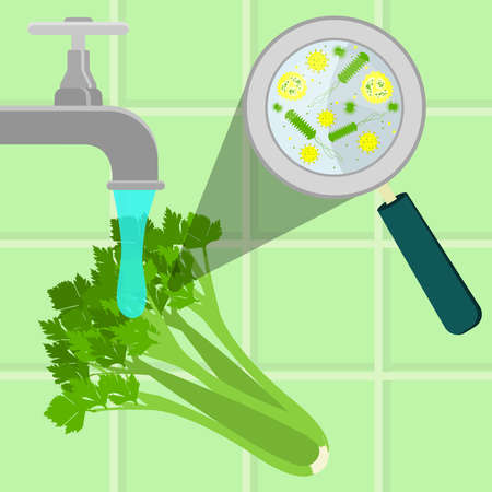 contaminated: Contaminated celery being cleaned and washed in a kitchen. Microorganisms, virus and bacteria in the vegetable enlarged by a magnifying glass. Running tap water. Illustration