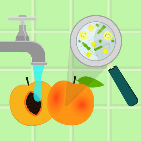 Contaminated peach being cleaned and washed in a kitchen. Microorganisms, virus and bacteria in the vegetable enlarged by a magnifying glass. Running tap water. Illustration