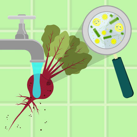 contaminated: Contaminated beet tree being cleaned and washed in a kitchen. Microorganisms, virus and bacteria in the vegetable enlarged by a magnifying glass. Running tap water.