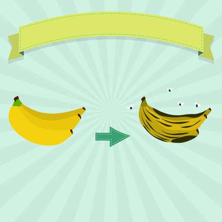 Rotten banana with flies and fresh banana. Blank ribbon for insert text.