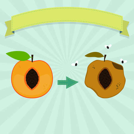 Rotten peach with flies and fresh peach. Blank ribbon for insert text. Illustration