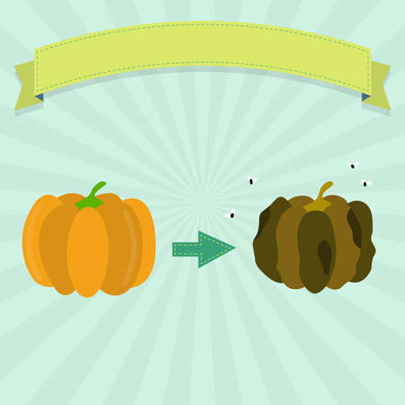 fungal disease: Rotten pumpkin with flies and fresh pumpkin. Blank ribbon for insert text. Illustration