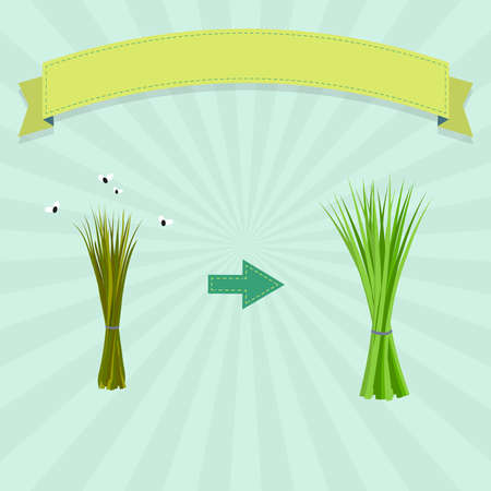 New chives and rotten chives with flies. Blank ribbon for insert text.